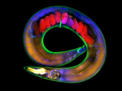 Экологическая память: черви передают информацию об изменениях окружающей среды через поколения