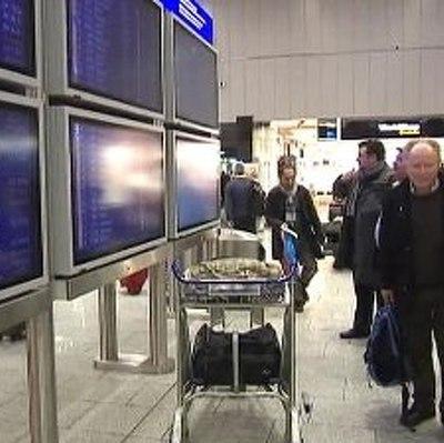 На Камчатке пес уже неделю ждет в аэропорту улетевшего хозяина