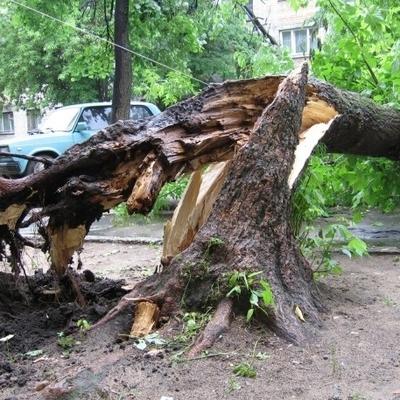 Сильный ветер в Московском регионе повалил деревья и повредил автомобили