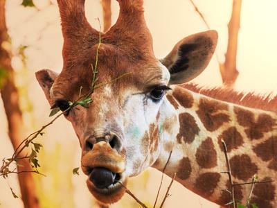 Зоопарк Буэнос-Айреса закрыли, оставив животных умирать в клетках