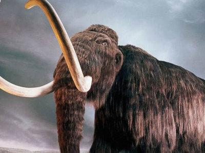 Уральский дачник нашел в огороде останки мамонта