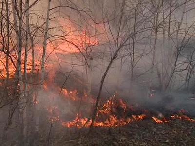 За сутки в Иркутской области потушили 22 лесных пожара