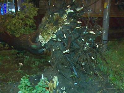 По коммунальщику на дерево: в Москве устраняют последствия урагана