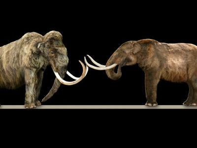 Палеонтологи выяснили причину гибели мамонтов на острове Святого Павла