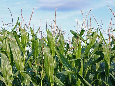 Новомодное биотопливо может влиять на изменение климата сильнее бензина