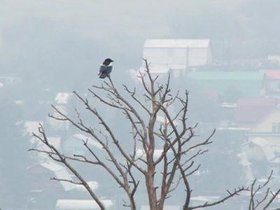 Жители Улан-Удэ лишились солнца: небо заволокло дымом лесных пожаров