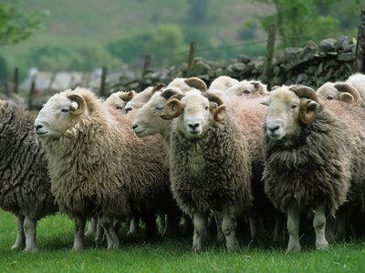 В Казахстане молния убила пастуха и 1,5 тысячи овец