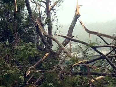 Ураган в детском лагере в Германии: есть пострадавшие и жертвы