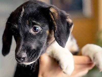 В приюте по сговору с коммунальщиками убили больше 200 собак, чтобы их не кормить