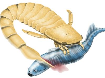 Вооружён и опасен: древние морские скорпионы убивали жертв зазубренным хвостом