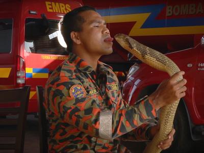 Заклинатель змей попал в больницу, поцеловав кобру
