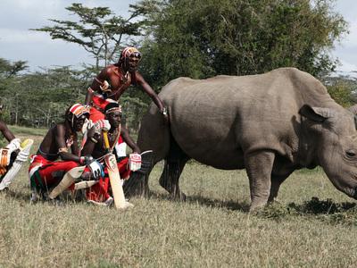Редкому носорогу ищут подругу через Tinder