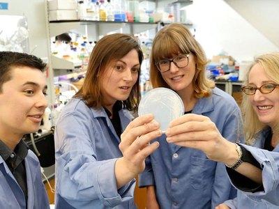 Краснеющие дрожжи помогут диагностировать грибковые заболевания