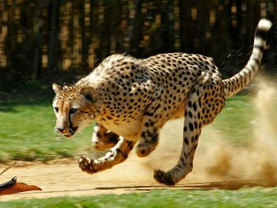 Почему средние по размеру существа являются самыми быстрыми. Ответ найден