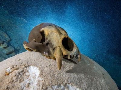 Мексиканская пещера тысячи лет хранила останки невероятных животных ледниковой эпохи