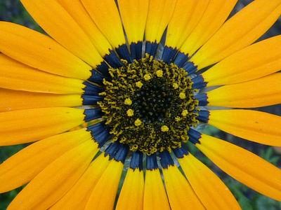 Нанотехнологии помогают цветам привлекать пчёл