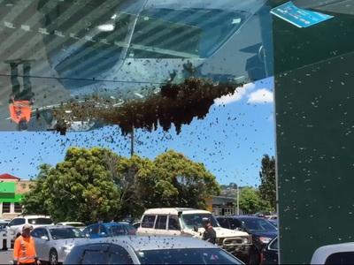 Рой пчел оккупировал торговую улицу. Видео