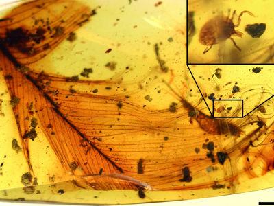 Клещ верхом на пере динозавра поведал учёным о жизни кровососущих мелового периода