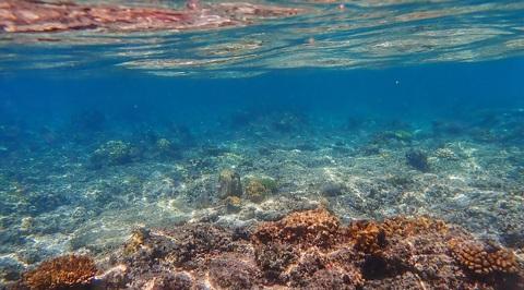 3,6 миллиарда хиросим: Мировой океан в 2019 году был самым тёплым за всю историю наблюдений