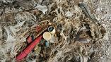 Останки птенца альбатроса, которого родители кормили пластиковыми отходами