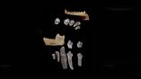 Учёные продолжат изучать местность, где были найдены зубы