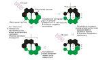 Феринга создал первый молекулярный двигатель, который был сконструирован таким образом, чтобы вращаться только в одном направлении. Его группа в итоге оптимизировала конструкцию, чтобы она вращалась со скоростью 12 миллионов оборотов в секунду.