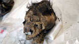 Голова алтайской мумии со следами травмы. Фото: The Mongolian Observer/The Center of Cultural Heritage of Mongolia
