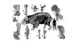 Тело животного похоже на тело носорога, а клюв – на клюв черепахи.