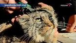 Хищников как домашних кошек выходили и вот теперь решили выпустить на свободу