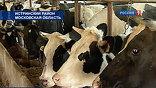 Пока ферма дает 13 тонн молока в сутки. Его покупают московские молочные заводы. А ещё сюда приезжают из окрестных посёлков местные жители и дачники.