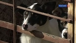 Любители собак, среди которых - немало известных актеров, писателей и музыкантов уверены: это путь к истреблению бродячих собак