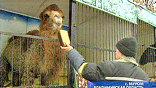 Когда в зооцирке появились первые жертвы, чиновники Муромской администрации решили спасать оставленных без присмотра животных