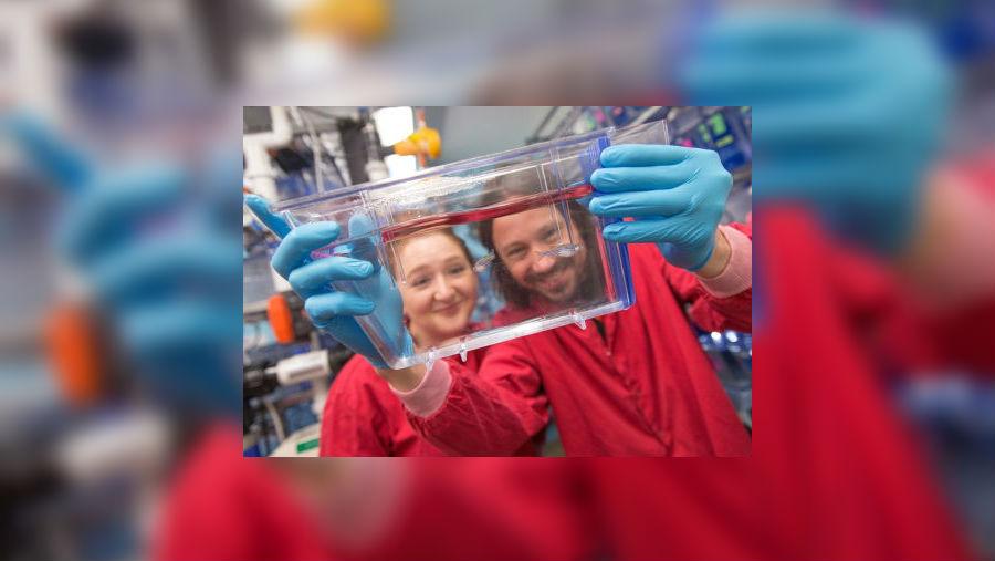 Ученые хотят использовать бактерий-хищников влечении