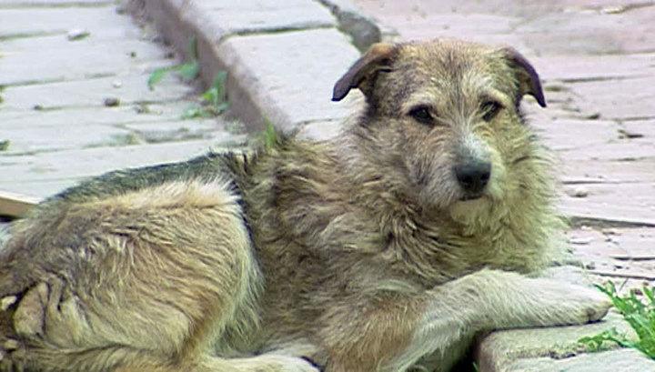 Бродячие собаки в Подмосковье: в ситуации разбирается Следственный комитет