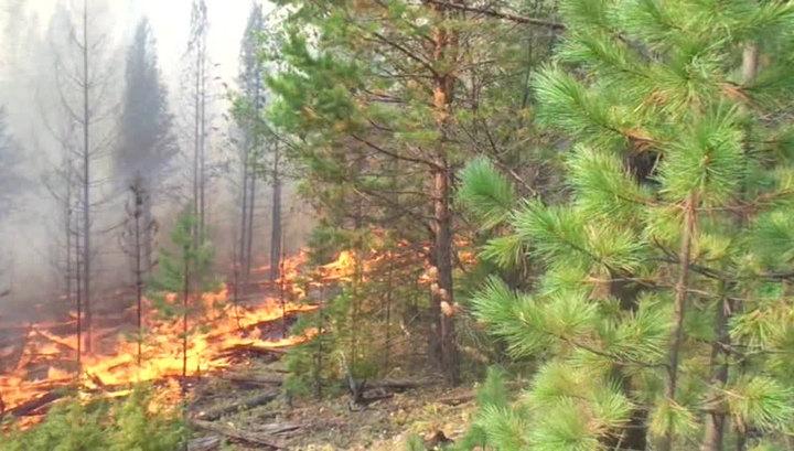В Санкт-Петербурге тушат крупный природный пожар