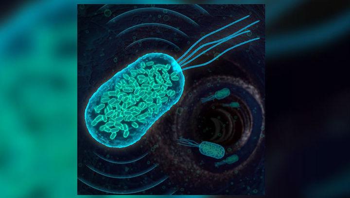 Модифицированные бактерии раскроют своё местоположение при помощи ультразвука