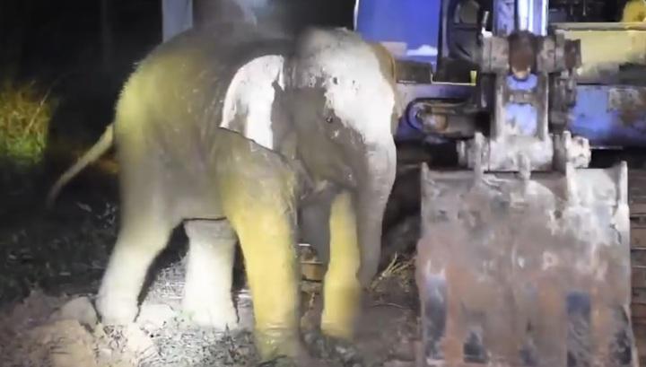 Драматичное спасение слоненка, провалившегося в колодец в Таиланде, попало на видео