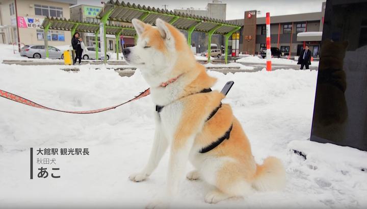 В Японии собаки сняли панорамы для карт Google. Видео