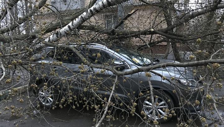 Сильный ветер повалил в Москве несколько деревьев