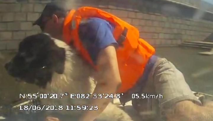 Спасатели вытащили из Оби унесенную течением крупную собаку