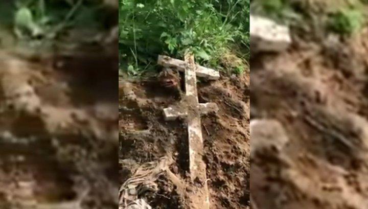 Медведи разорили могилы на кладбище на Камчатке