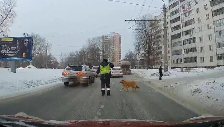 """""""Не так уж и суров"""": челябинский инспектор остановил движение ради хромой собаки"""