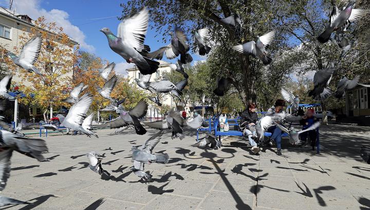 Это вам не Венеция: в Магадане разразился скандал из-за запрета кормить голубей