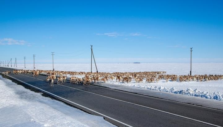 На Севере проложат платные дороги без бесплатных дублеров photo