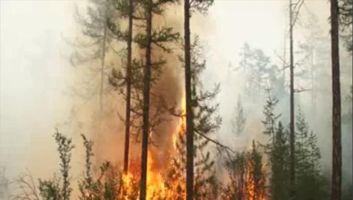 В Красноярском крае горит более 670 тысяч гектаров леса