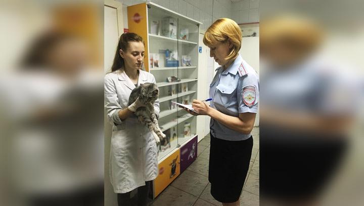 В Томске на выкинувшего котов с 8 этажа завели дело