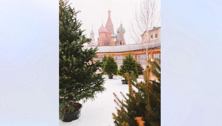 """В столичный парк """"Зарядье"""" завезли снег"""