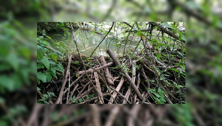 В Тверской области поймали браконьера, поставившего капканы на бобров