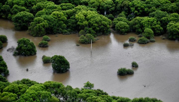 Уровень воды в реках Приморья поднялся больше чем на полтора метра