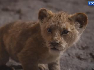 В Лондоне состоялась премьера киноверсии анимационной ленты «Король Лев»
